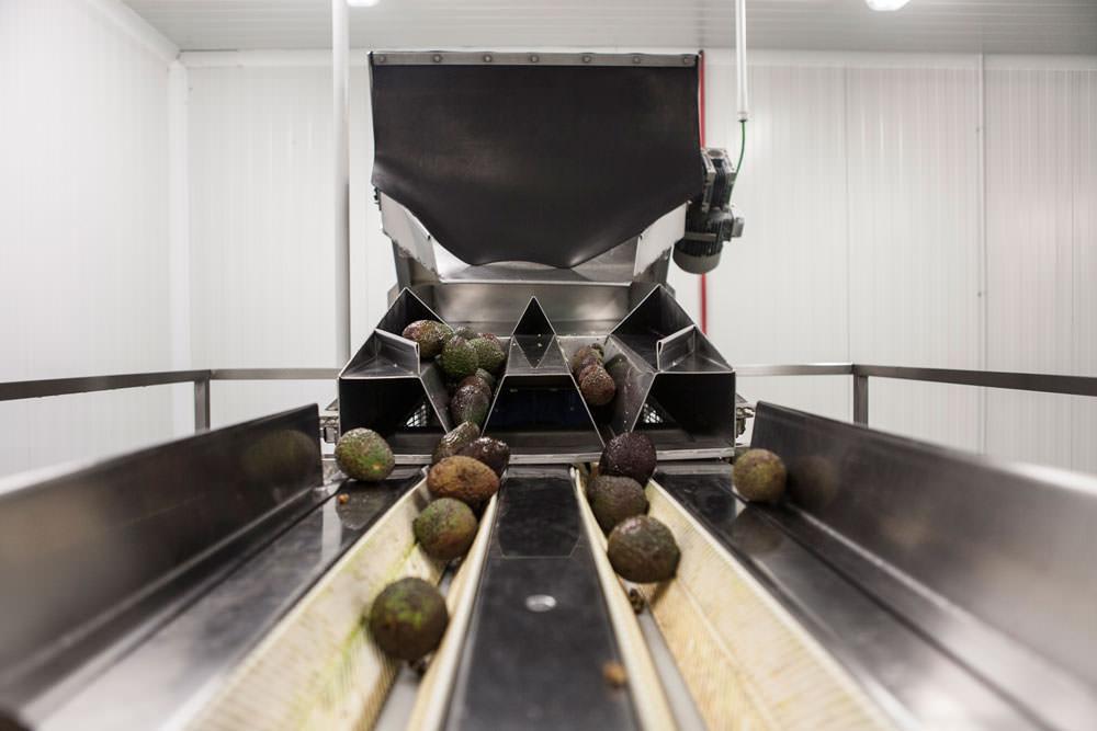 Frumaco - Cadena transportadora